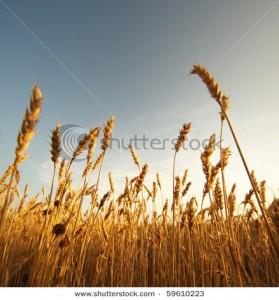 бесплатные стоковые фотографии и иллюстрации на Shutterstock