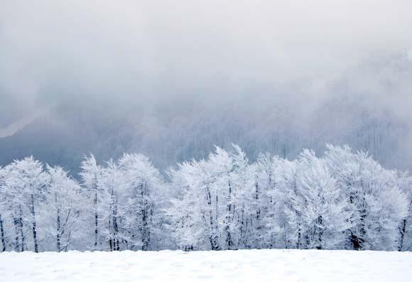 деревья, снег, зимние животные, снежинки, пингвины, полярные медведи