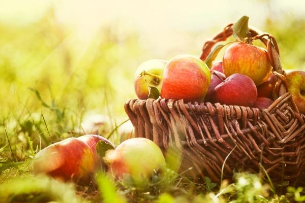 Осень и осенний урожай