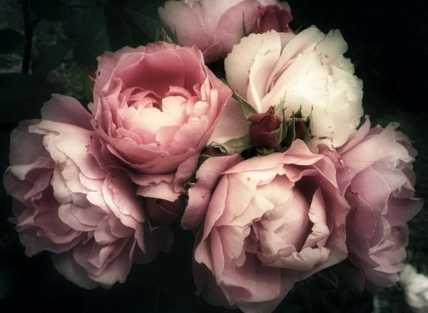 романтические полутона рококо